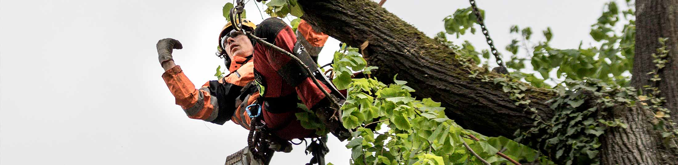 Nürnberger Baumpflege GbmH in Ihrer Nähe
