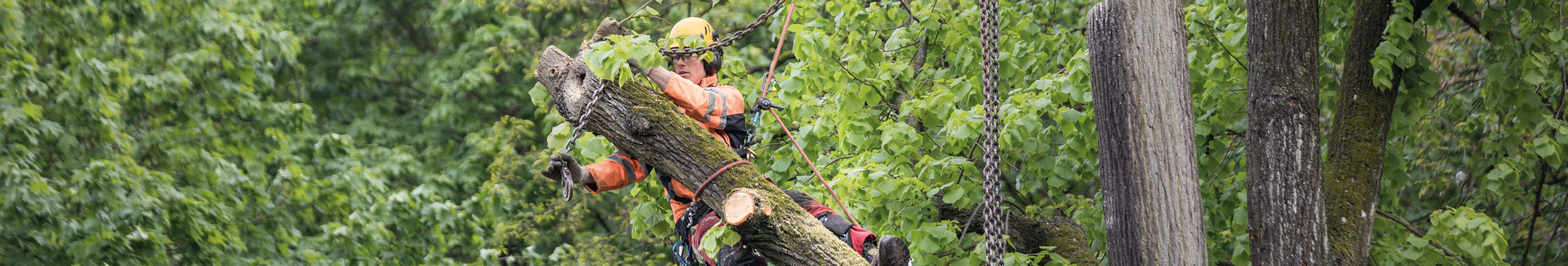 Nürnberger Baumpflege - Leistungen Baumfällung in Nürnberg und Umgebung